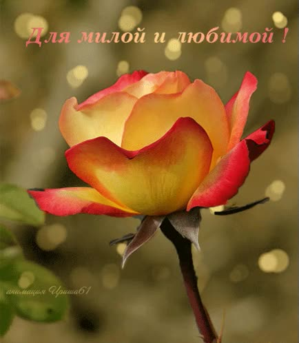 Watch and share Для Милой И Любимой. GIFs on Gfycat