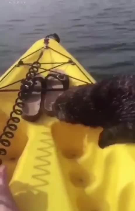 Watch and share Kayak GIFs and Otter GIFs by tothetenthpower on Gfycat