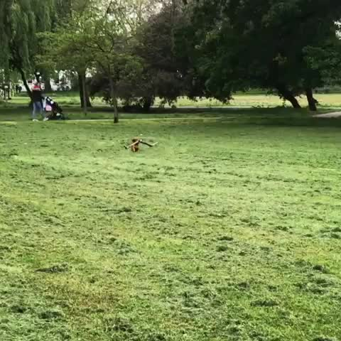 Watch and share Sausagedog GIFs and Ambition GIFs by notmyproblem on Gfycat