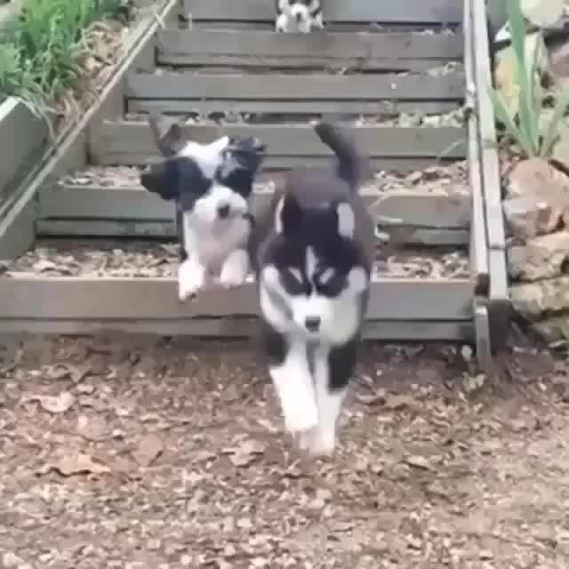 michaelbaygifs, [REQUEST] Puppies falling down stairs in slow motion (reddit) GIFs