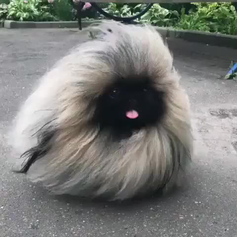 Watch and share Tiny Floof GIFs on Gfycat