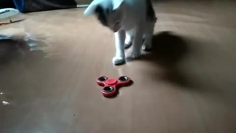 aww, cat, cats, cattaps, cute, kitty, When you tap it just right... GIFs