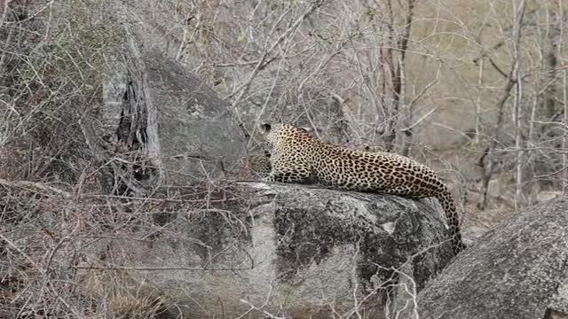 Watch and share Ndzanzeni Cubs GIFs by Londolozi Game Reserve on Gfycat