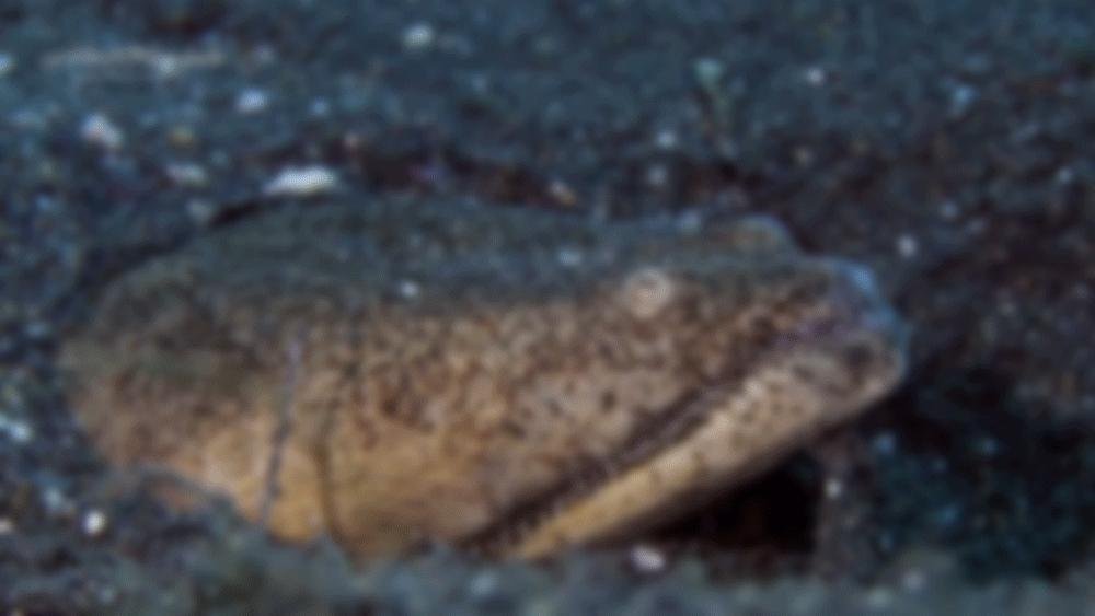 animalid, naturegifs, sea monster (reddit) GIFs