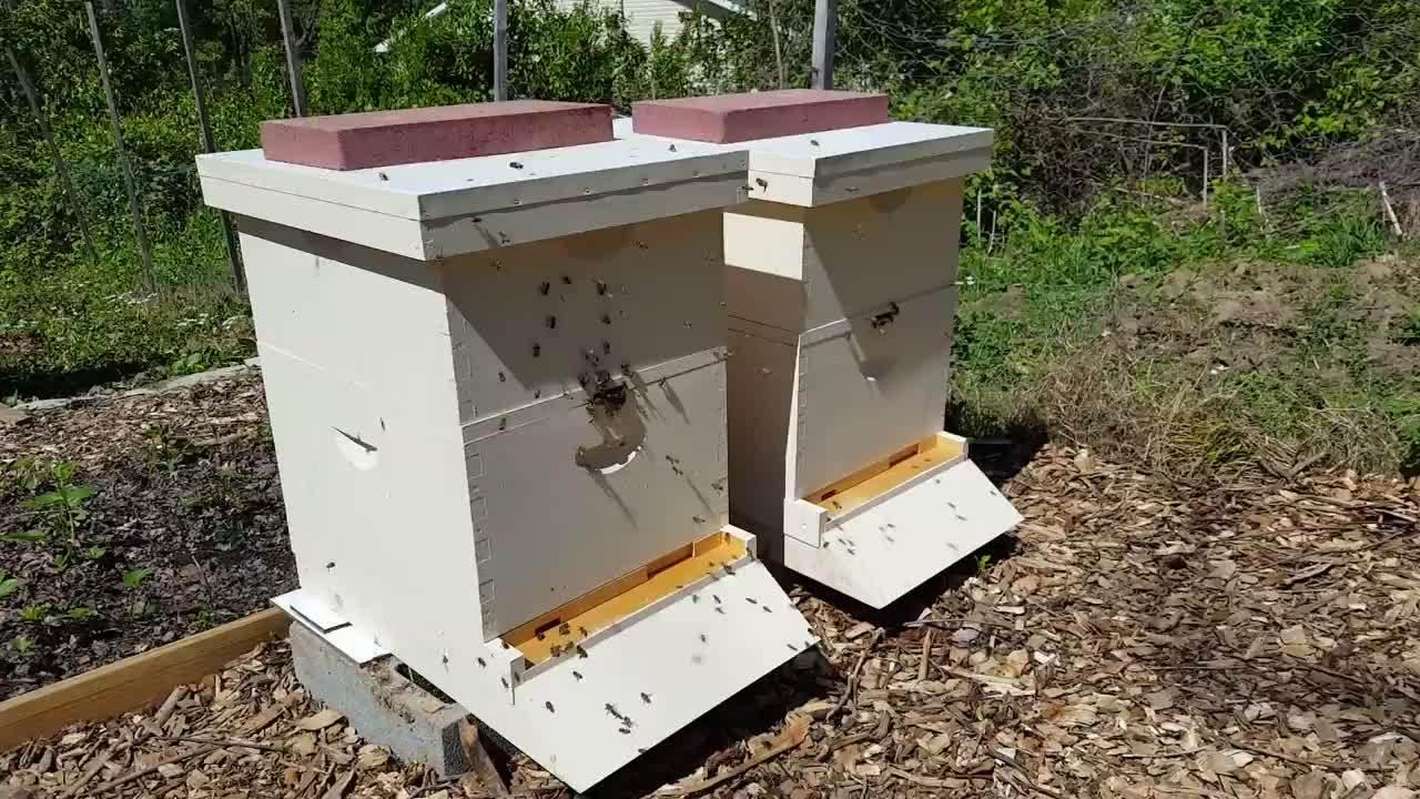 beekeeping,  GIFs