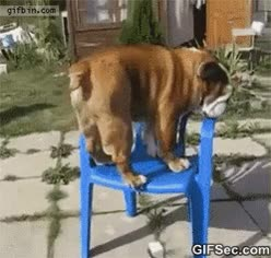 Watch bulldog GIF on Gfycat. Discover more related GIFs on Gfycat