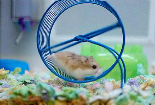 Watch and share Hamster Wheel GIFs on Gfycat