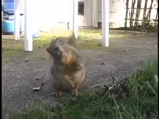 Squirrel GIF