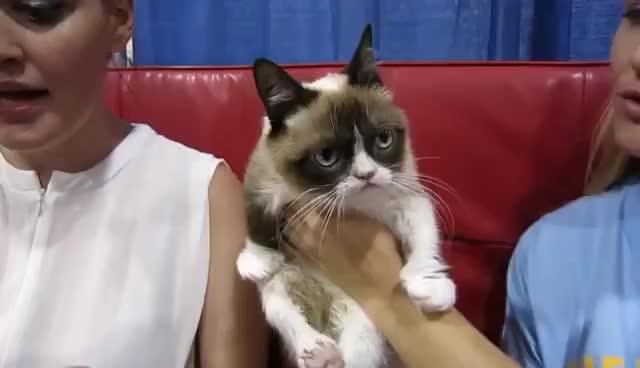 cat, grumpy, grumpy cat, no, pic, picture, stahp, why, Grumpy Cat GIFs