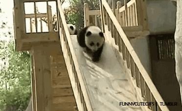 Animals, Giant Panda, Nature, Panda, Panda Bears, Panda GIFs, Wild Animals, Wildlife, Bears! Bears! Bears! GIFs