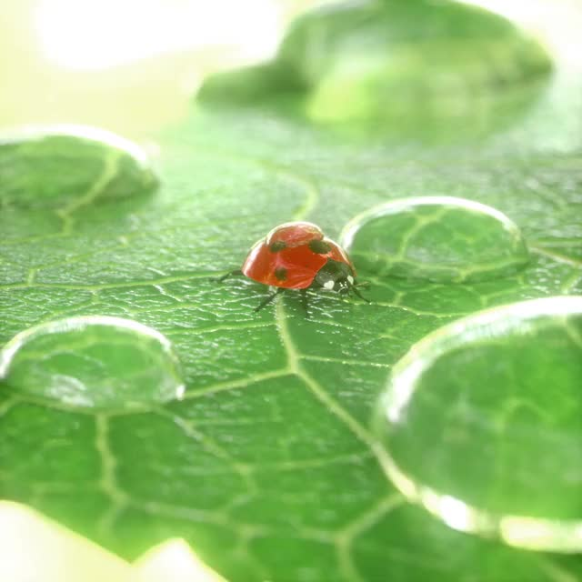 Watch and share Ladybug GIFs and Beetle GIFs by bigblueboo on Gfycat