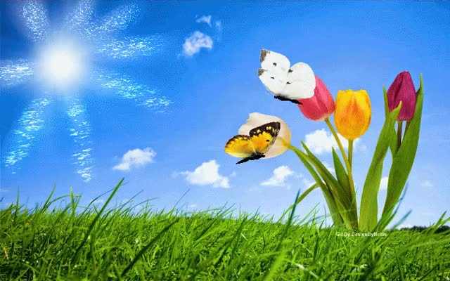 Watch and share Butterflies And Tulips GIFs on Gfycat