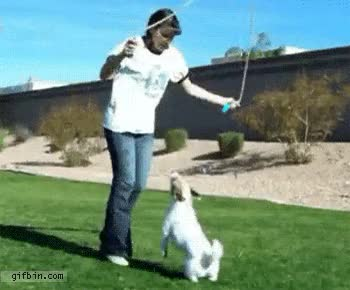 Watch and share Reverse Dog Jumping Rope GIFs on Gfycat