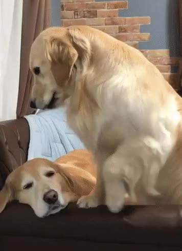 Watch and share Dog GIFs on Gfycat