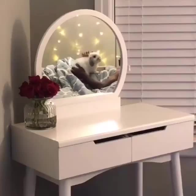 Watch Every day magic✨ with my papa 🥰 GIF on Gfycat. Discover more Winter Marble Lop GIFs on Gfycat
