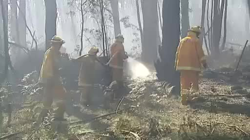 Watch and share more GIFs by abcnews_australia on Gfycat