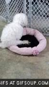 Watch and share Dog Bed Humping GIFs on Gfycat