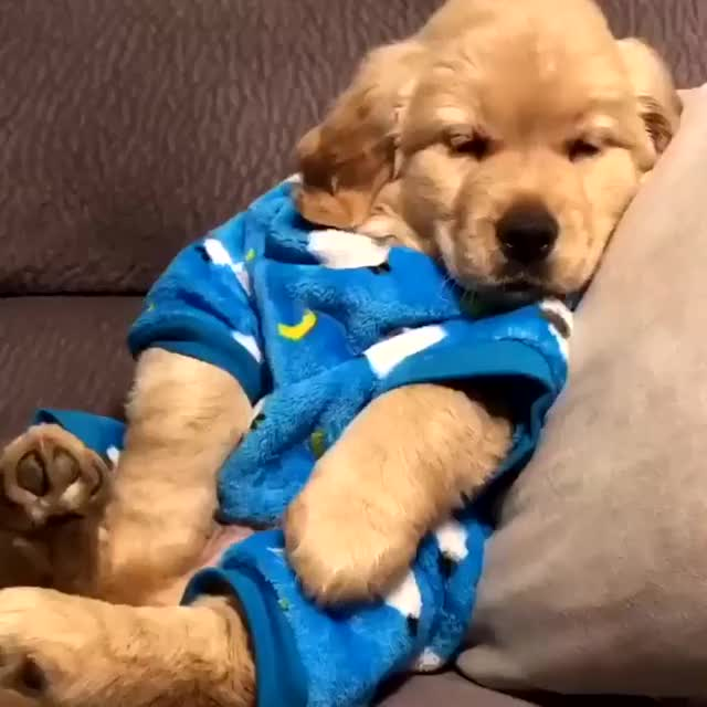 Watch puppy yawn GIF by Nomorefoxgiven (@nomorefoxgiven) on Gfycat. Discover more related GIFs on Gfycat