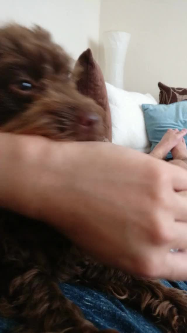 Watch and share Your Puppy Ran Into A Problem And Needs To Restart! GIFs on Gfycat