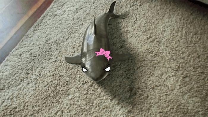 TsundereSharks, tsunderesharks, Shark-chan performs for senpai (reddit) GIFs