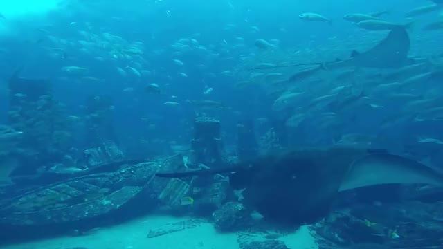 Watch and share Dubai Aquarium GIFs on Gfycat