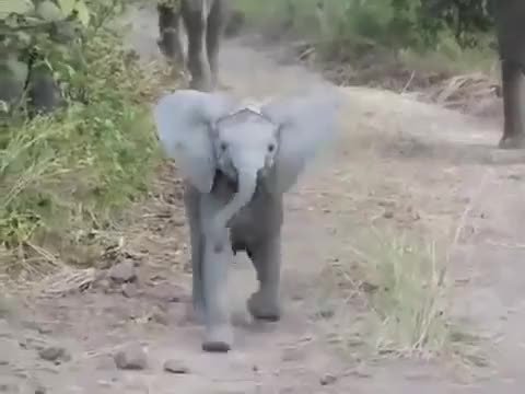 Watch Come at me bro. (reddit) GIF on Gfycat. Discover more babyelephantgifs GIFs on Gfycat