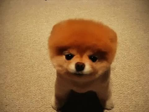 Watch and share Doge Wow GIFs on Gfycat