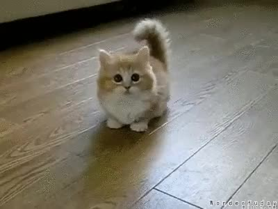 Watch Adorable GIF on Gfycat. Discover more related GIFs on Gfycat