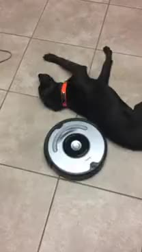 Watch and share Lazy Dog And Roomba GIFs on Gfycat
