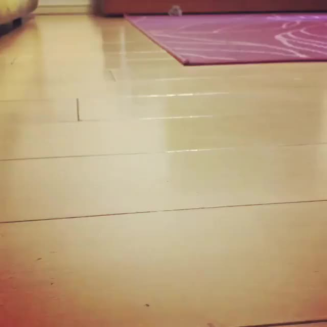 Watch tippy taps GIF on Gfycat. Discover more related GIFs on Gfycat