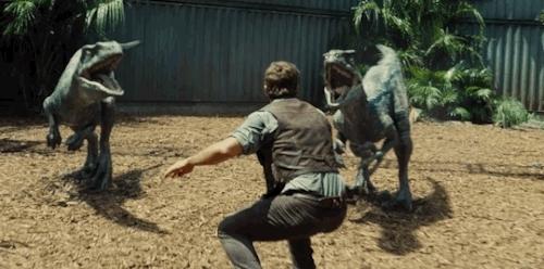 carnivores, chris pratt, dinos, dinosaur, hunt, jurassic, jurassic park, jurassic world, motorcycle, owen grady, pack animal, t rex, tyranosaurus rex, velociraptor, Soylent GIFs