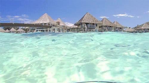 Watch and share Mer, Ocean, Plage Paradisiaque, Seychelles, Eau Cristalline GIFs on Gfycat
