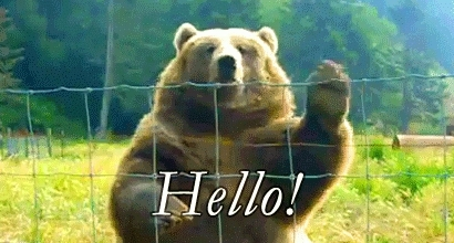 Bear, Hello, Hi, Waving, Hello GIFs