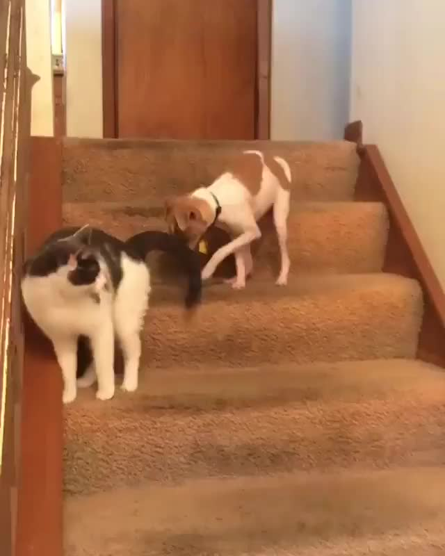 Watch You can't run away from your problems forever - Follow @animalsdoingthings fo... GIF on Gfycat. Discover more related GIFs on Gfycat