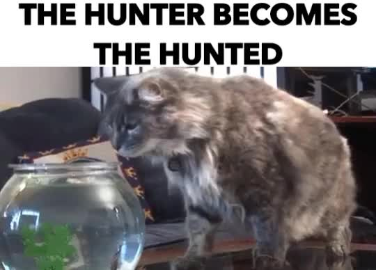 Watch THE HUNTER BECOMES THE HUNTED GIF by GIF Reactions (@visualecho) on Gfycat. Discover more related GIFs on Gfycat