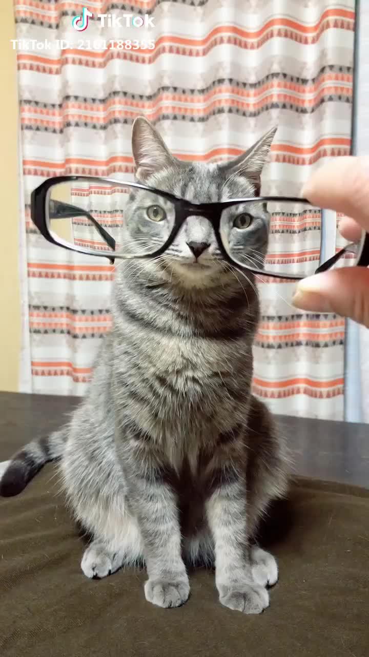 cat, cutecat, freezechallenge, 目が離れたニャー😳👓 #フリーズチャレンジ #自慢のペット #ペットの不思議 #cat #ペット #キュン死 #猫 #freezechallenge #cutecat GIFs