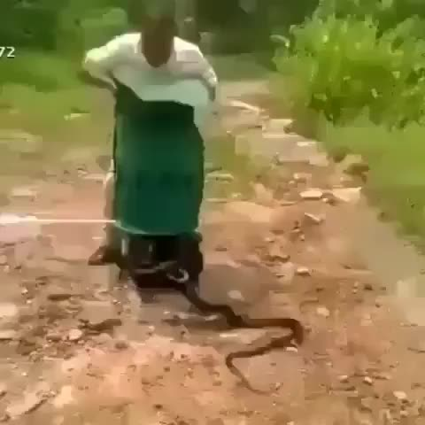 Watch and share Animalovers GIFs and Animalista GIFs by Master1718 on Gfycat