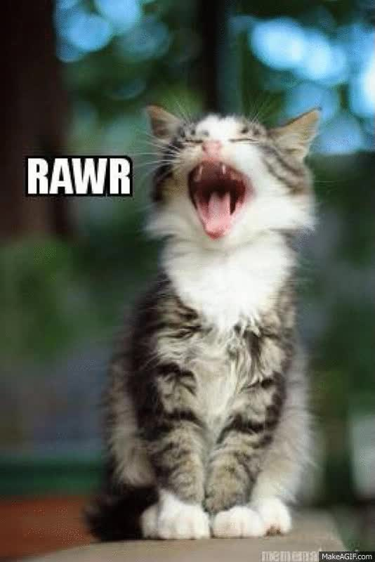 Watch and share Rawr Kitten GIFs on Gfycat