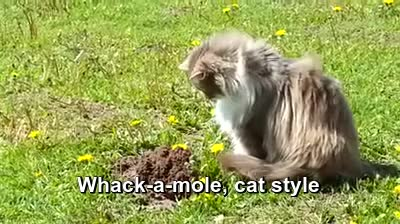 Watch and share Mole GIFs and Cat GIFs on Gfycat