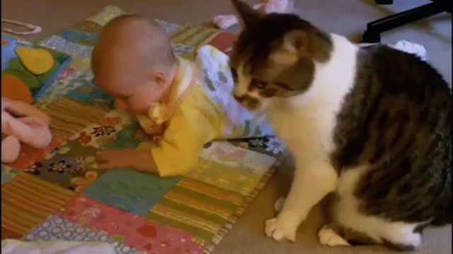 Детские гифы про животных