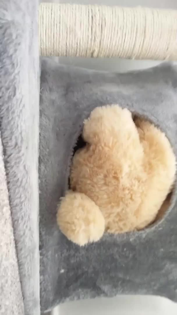 Watch and share more GIFs by GifReversingBot/vredditshare on Gfycat
