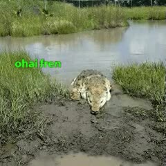 Watch croc GIF on Gfycat. Discover more related GIFs on Gfycat