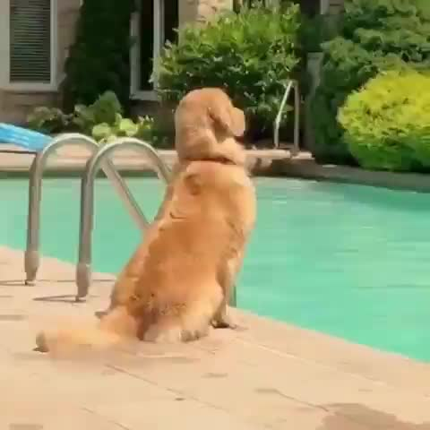 Guardian of the pool GIFs