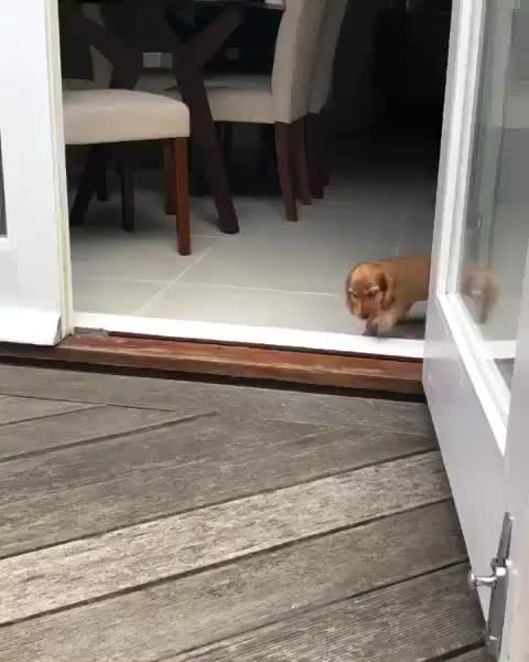 sproing sproing for pets GIFs
