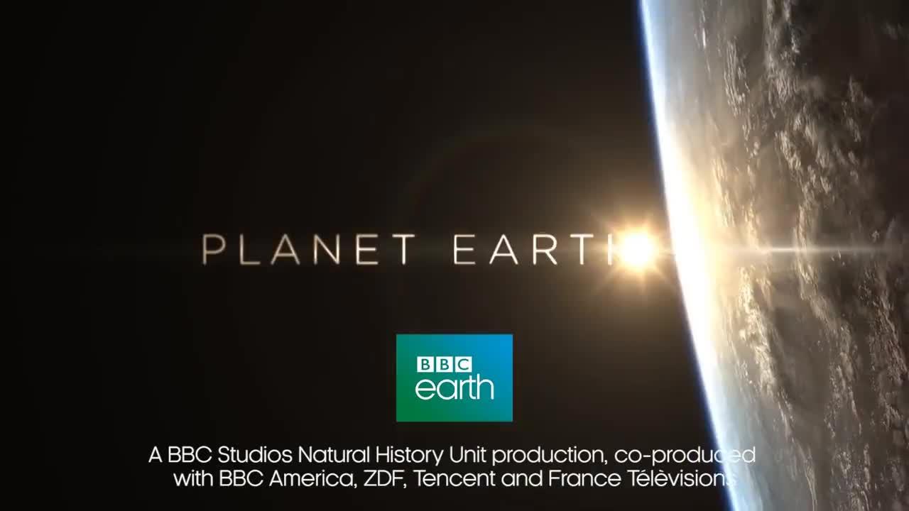 Attenborough, Islands, Mate, animals, bbc, comedy, courtship, cute, escudo, fun, funny, humour, nature, sloth, wild, wildlife, Swimming Sloth Searches For Mate | Planet Earth II GIFs