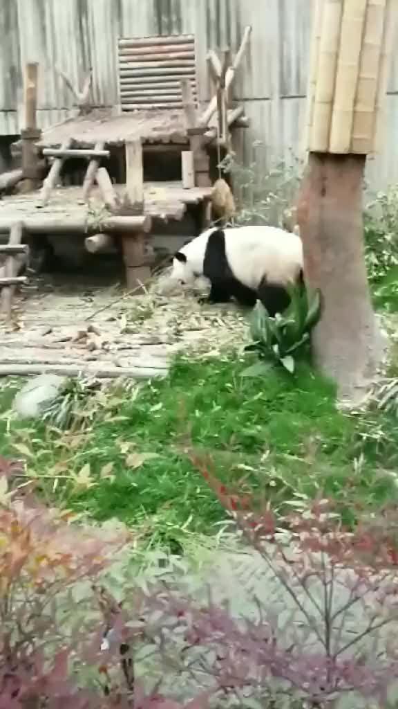Watch Kungfu Panda GIF by interesting (@interesting) on Gfycat. Discover more related GIFs on Gfycat