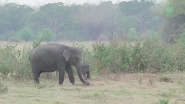 Watch and share Amazing Baby Elephant Plays And Explores The Bush GIFs by PM_ME_STEAM_K3YS on Gfycat