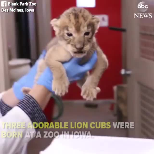 Watch Video by abcnews GIF by @awkwardtheturtle on Gfycat. Discover more awkwardtheturtle GIFs on Gfycat