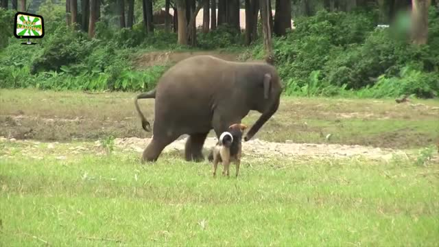 Watch and share Funny Elephants ★ FUNNY ELEPHANT VIDEOS [Epic Laughs] GIFs on Gfycat