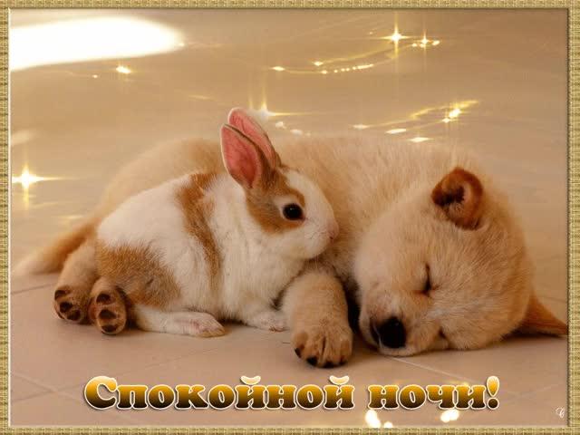 Watch and share Спокойной Ночи GIFs on Gfycat